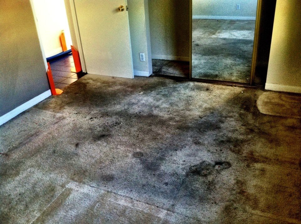 Thorough Carpet Cleaning and Maintenance Is a Necessary Task in Chino