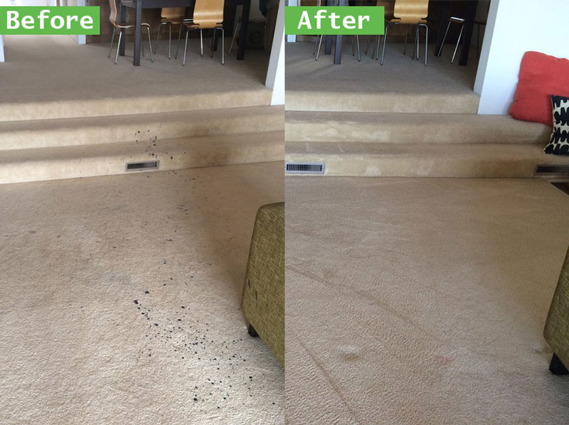Greatest Carpet Cleaning Deals and Prices Chino Area Rug Cleaning